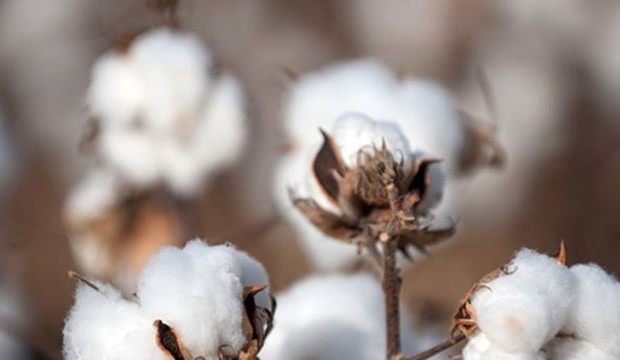 3 Resources for Sourcing Organic Cotton for Your Fashion